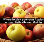 Where to pick your own Apples around Belleville and Quinte