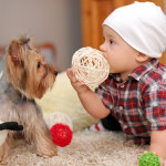 Things to Consider When Adopting a Family Pooch